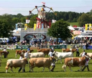 county show image of cattle and fairground